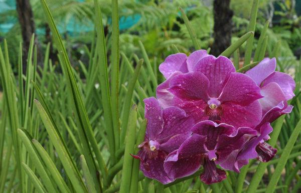 Сад орхидей в куала-лумпуре