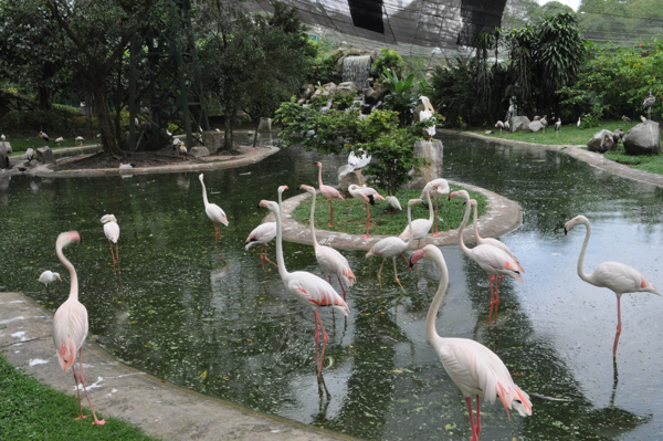Розовые фламинго в Куала-Лумпуре