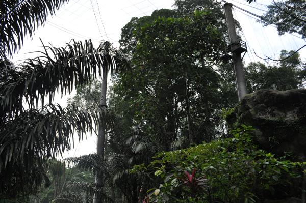 В парке птиц в куала-лумпуре