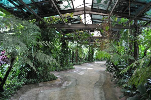 Гуляя по саду орхидей в куала-лумпуре