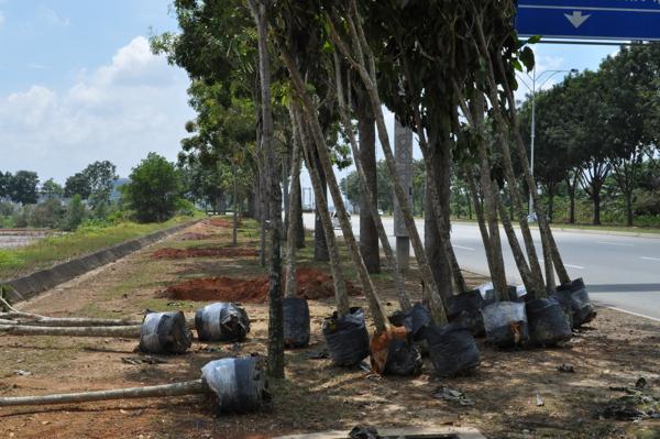 Деревья в Путраджае