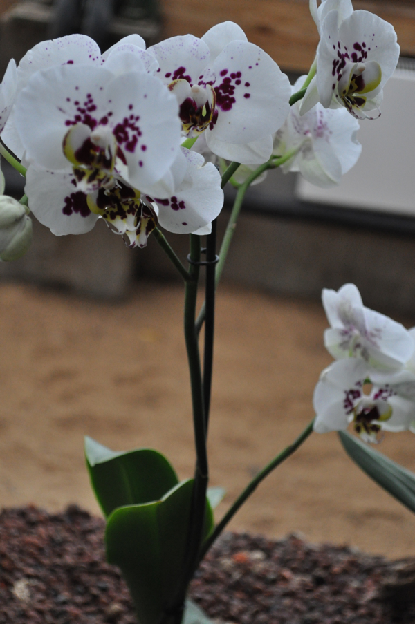 Выставка Орхидей в Зимнем саду Москвы