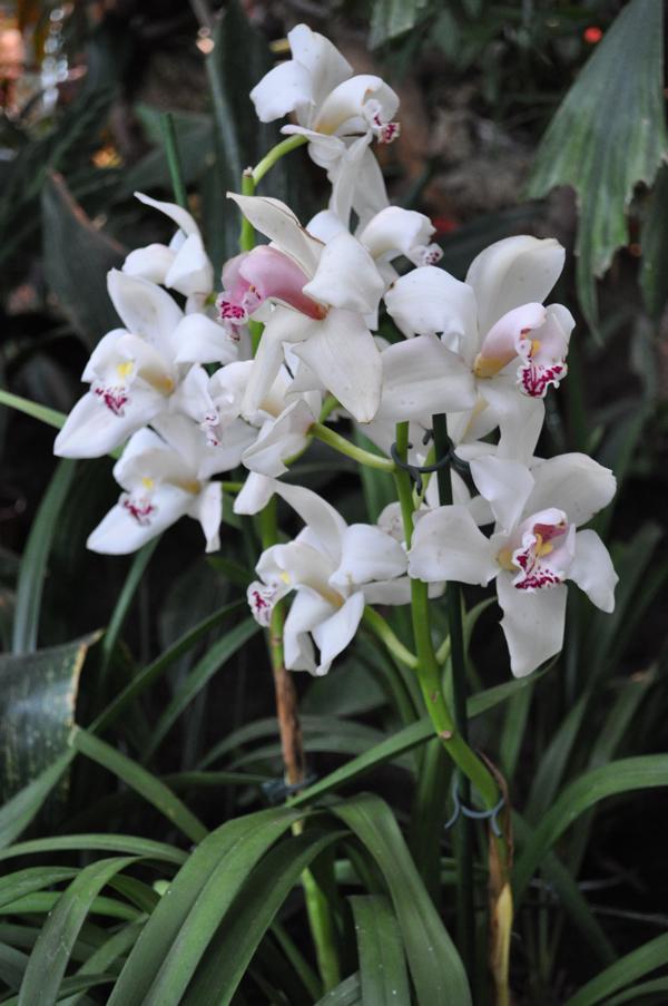 Орхидеи в Москве
