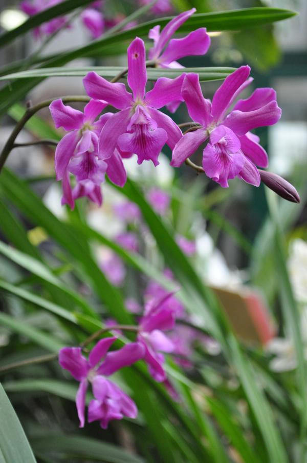 Орхидеи в зимнем саду
