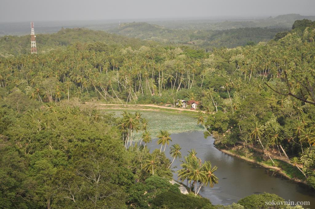 Джунгли на Шри-Ланке