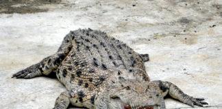 Крокодиловая ферма на Лангкави