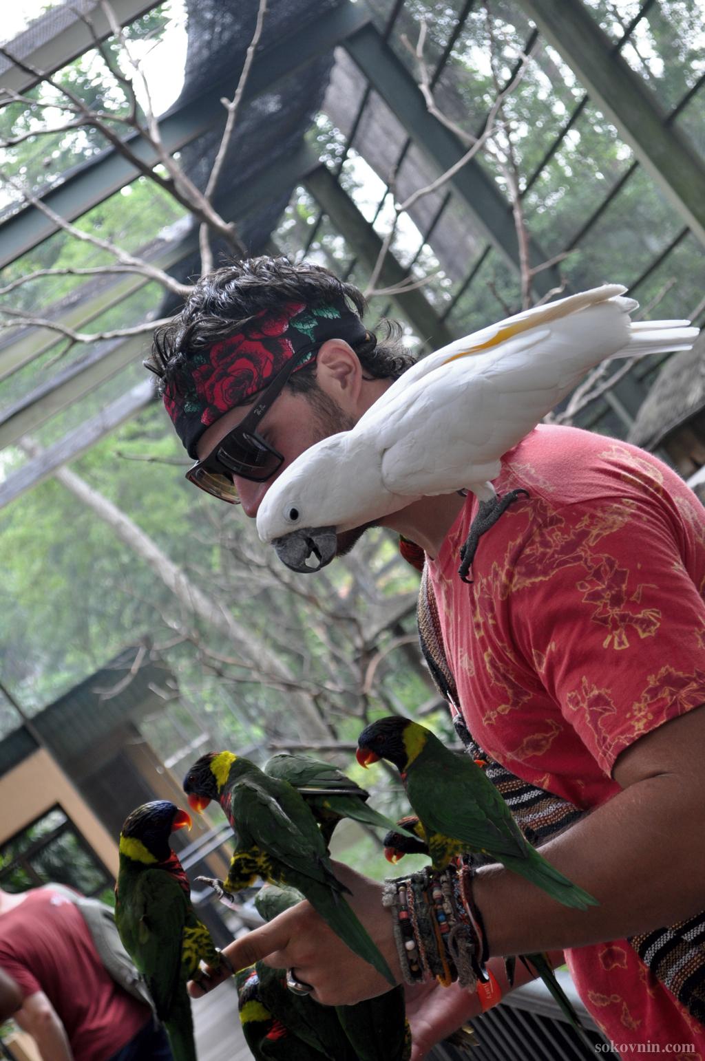 Попугаи в парке птиц