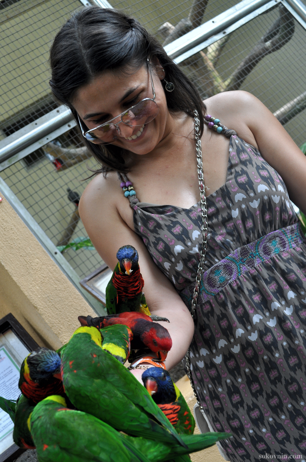 Попугаи садятся на руки и голову