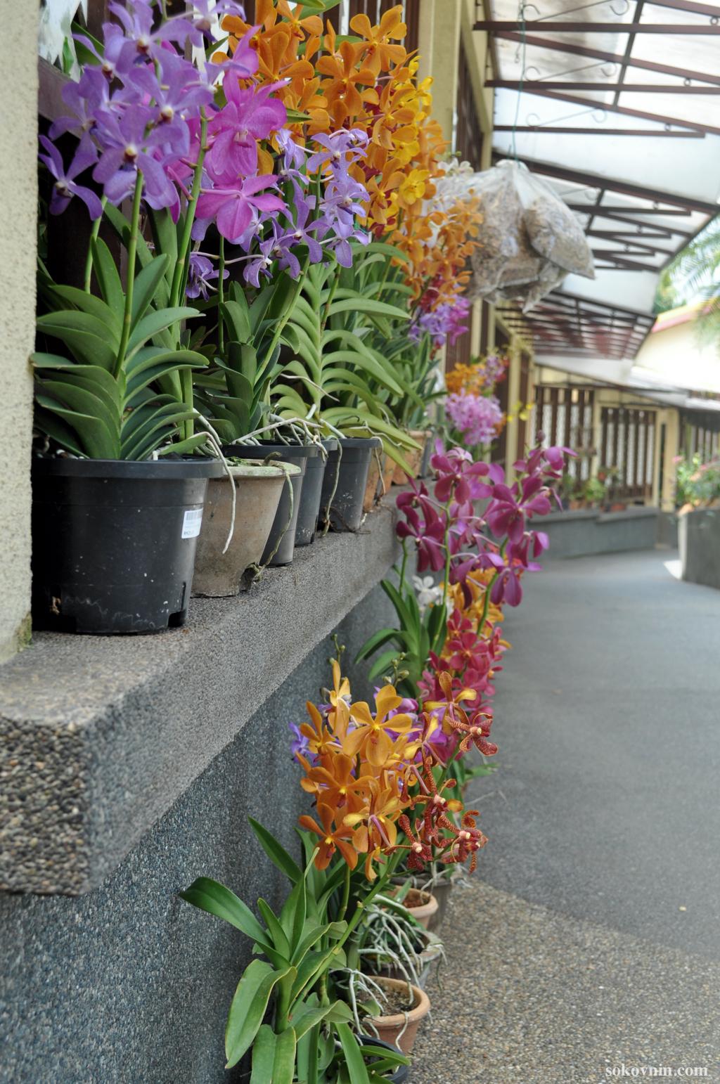 Цветы в Куала-Лумпуре