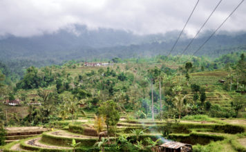 Рисовые плантации на Бали