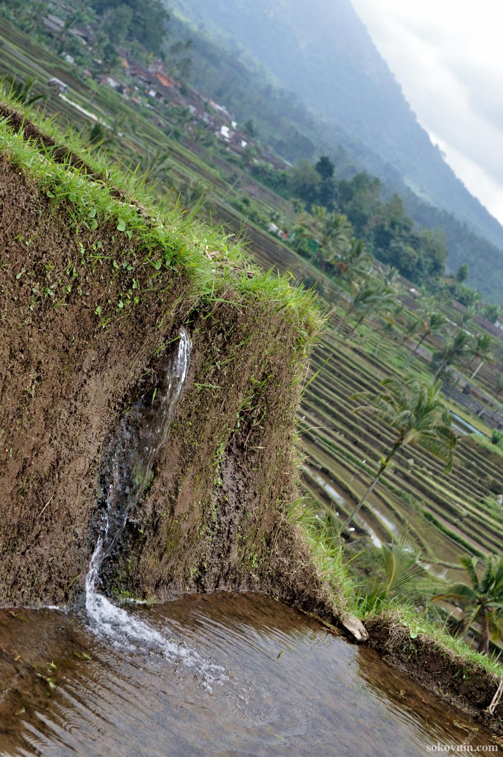 Рисовые плантации Джатилувих на Бали