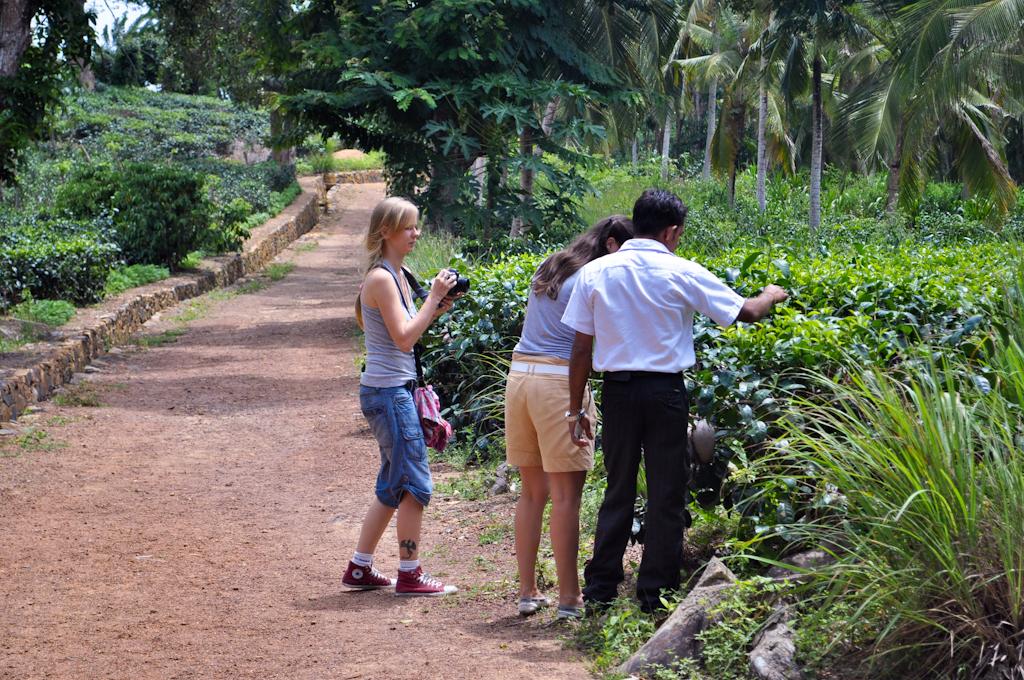 Чайные плантации на Шри-Ланке