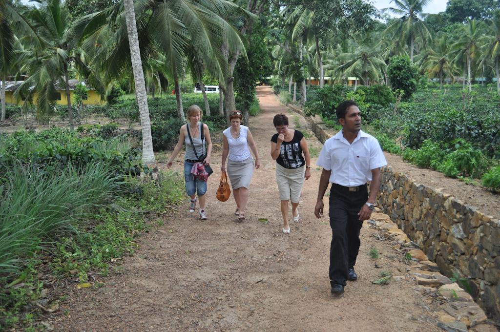 Экскурсия на чайные плантации