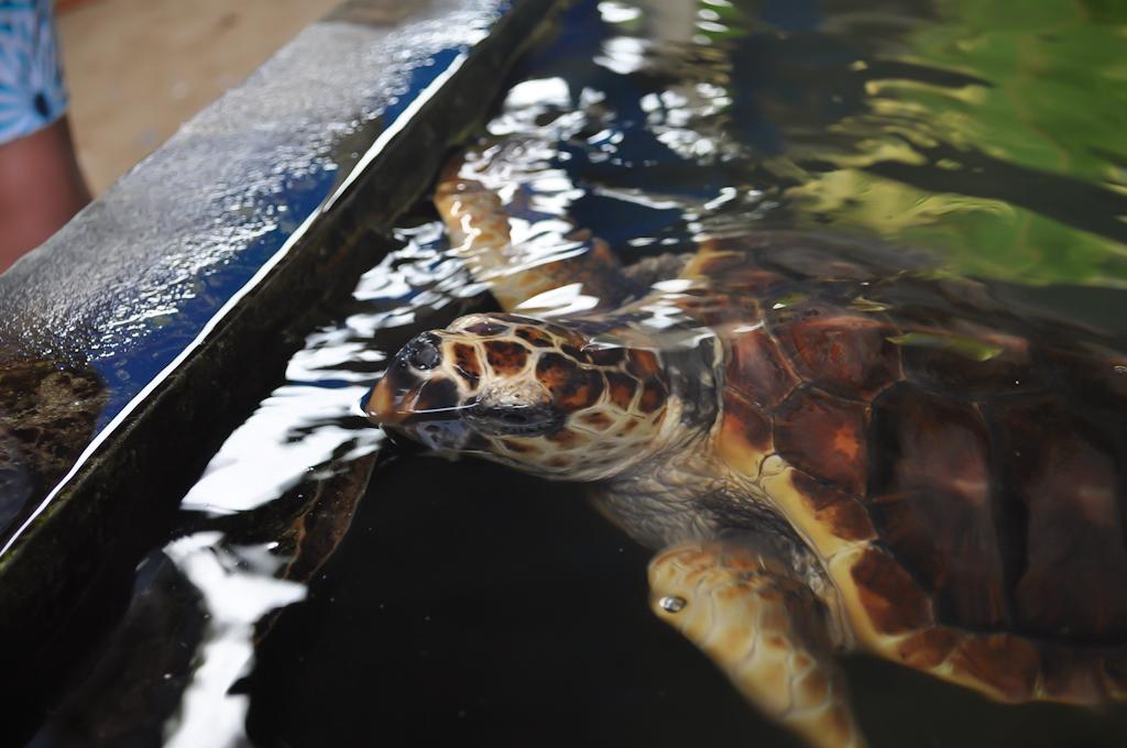 Шриланкийские черепахи