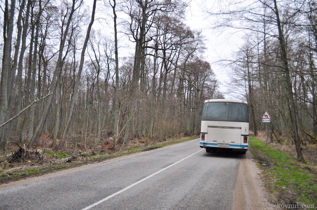 Автобус до Танцующего леса