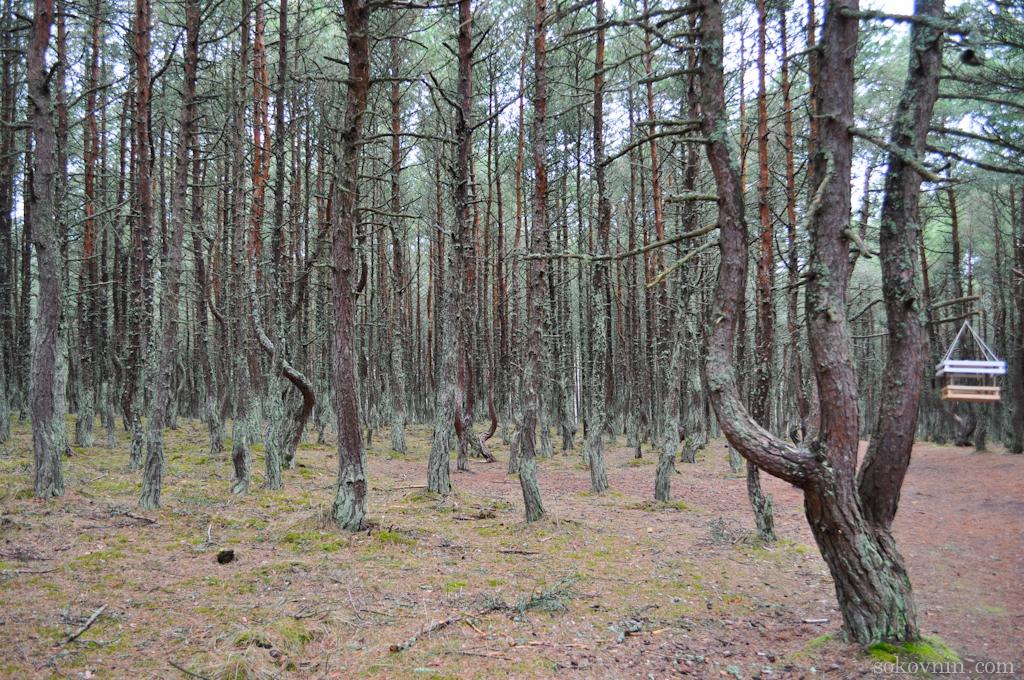 Танцующие деревья