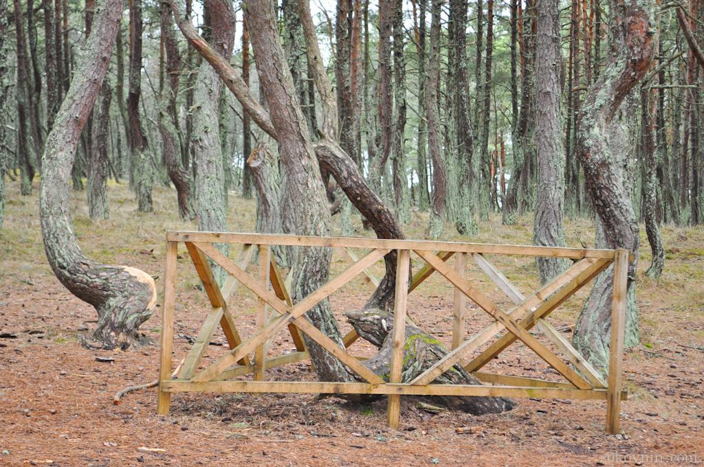 Огороженные деревья
