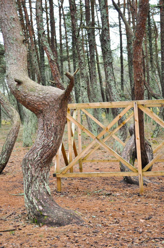 Некоторые деревья огораживают