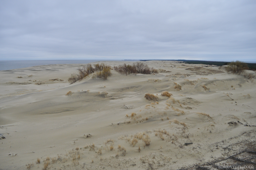 Песочные дюны в Калининграде