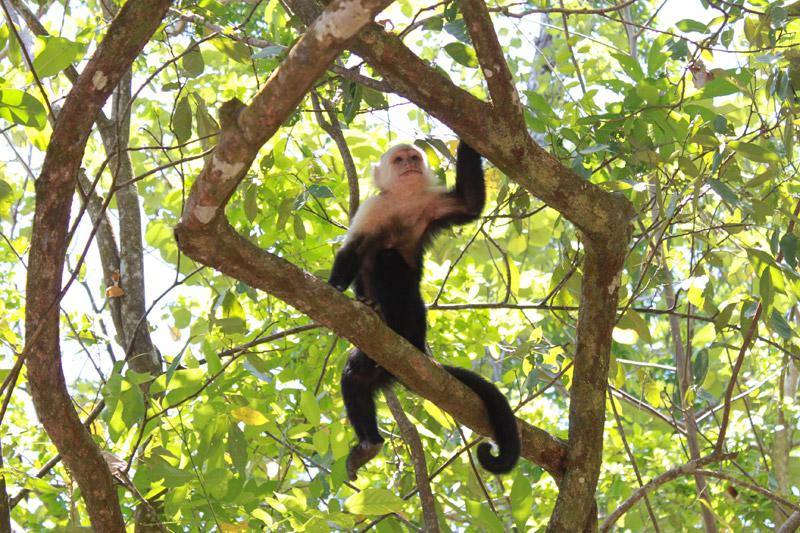 Национальный парк Кауита, Коста-Рика