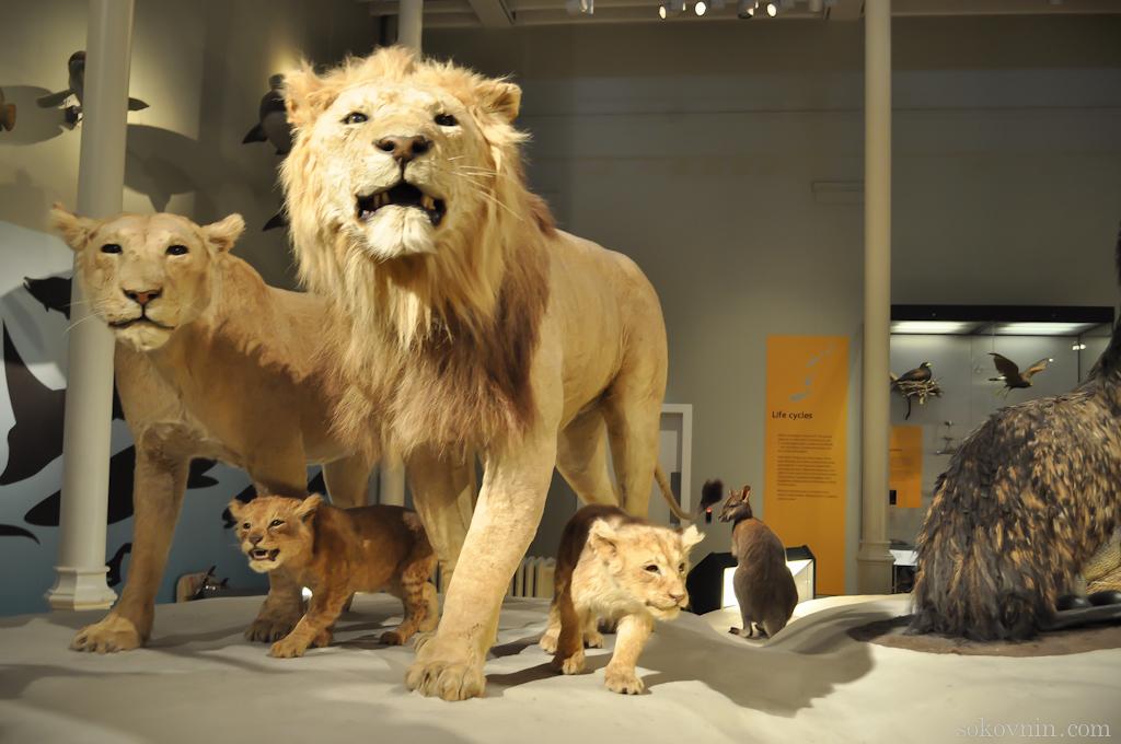 Животные в эдинбургском музее