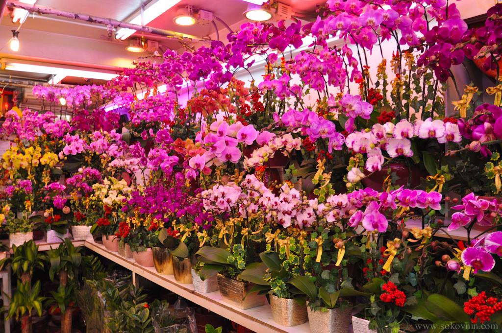 Купить орхидеи в гонконге