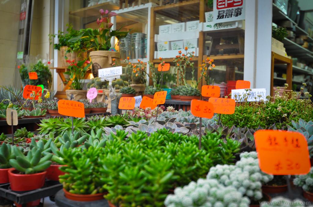 Магазины цветов в Гонконге