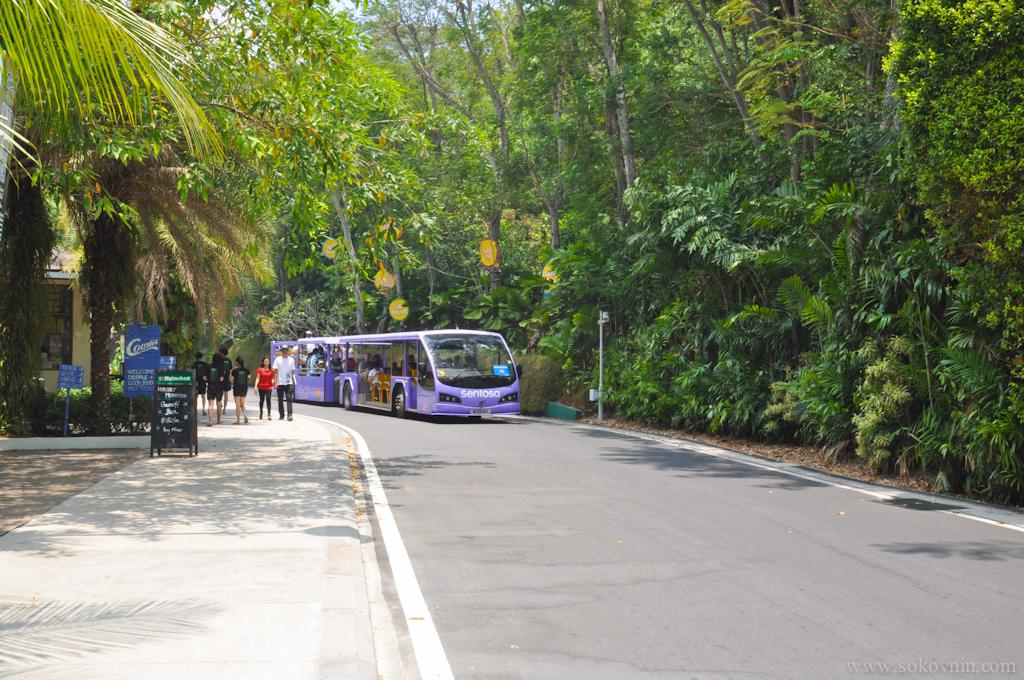 Бесплатный автобус на Сентозе