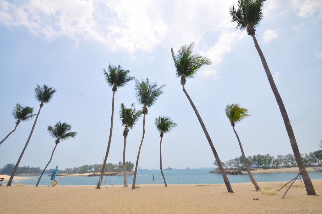 Пальмы на Сентозе
