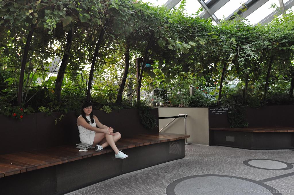 Вика в ботаническом саду в Сингапуре