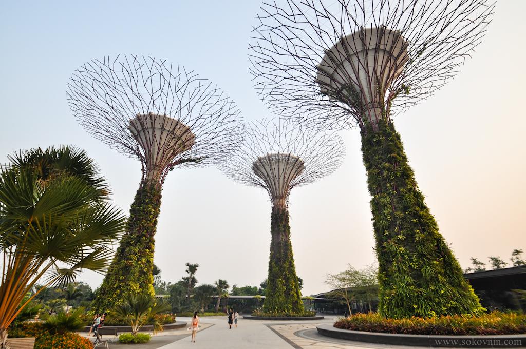 Гигантские деревья в Gardens by the Bay