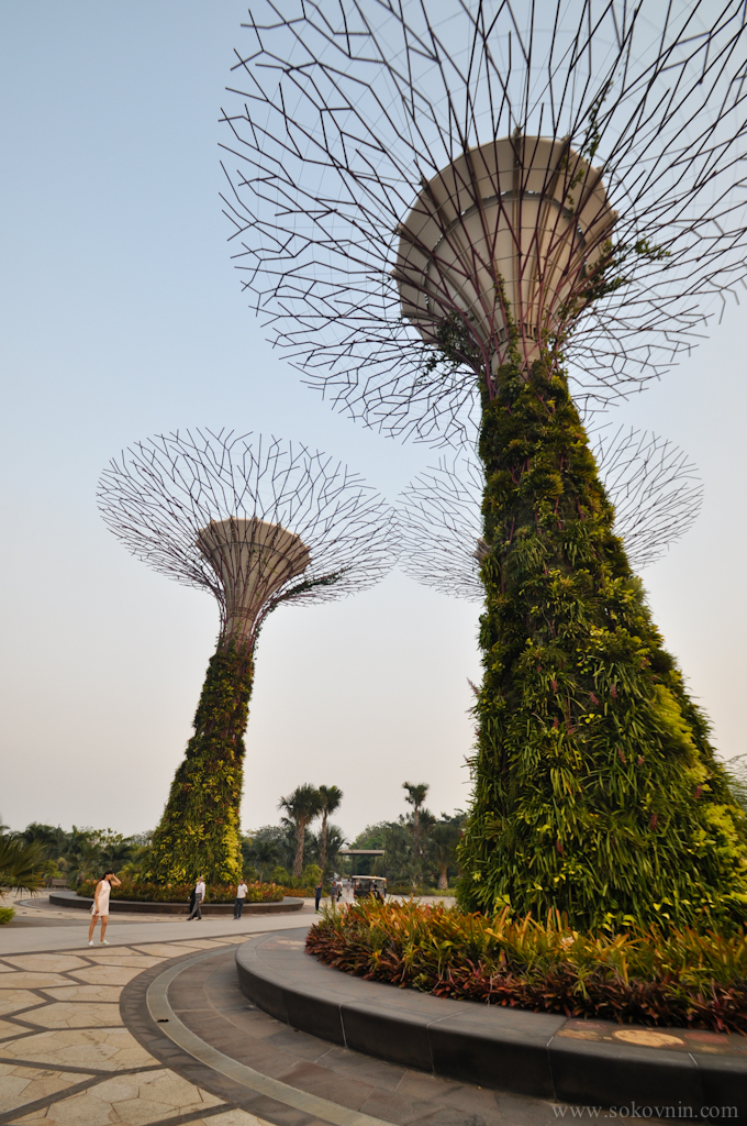 Огромные деревья в Сингапуре