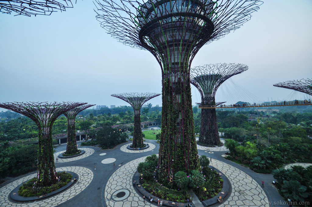 Деревья Gardens by the Bay