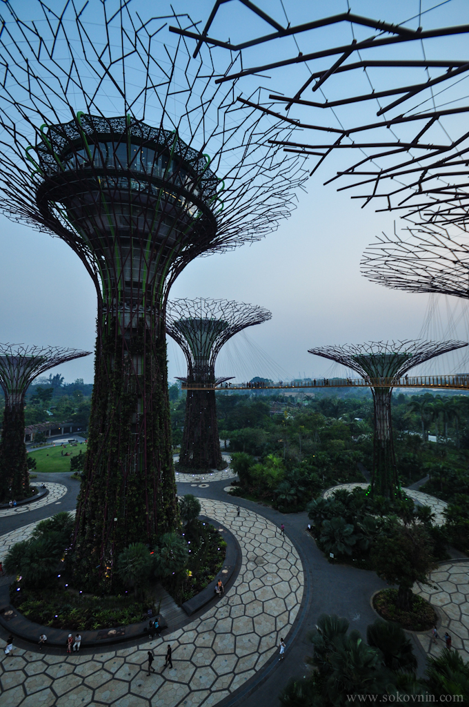 Большие деревья в Сингапуре