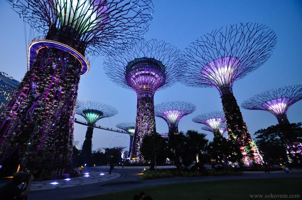 Световое шоу в Сингапуре Gardens Rhapsody